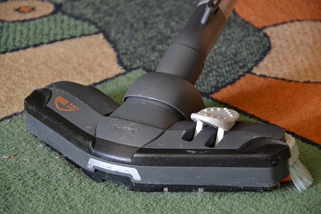 Does Vacuuming Kill Ants?