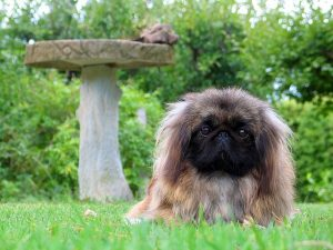 long haired dog on grass